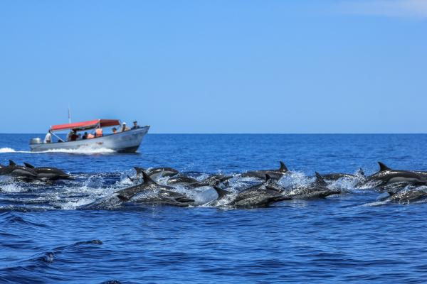 Dolphins Jumping in Baja