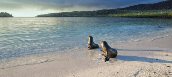 Wildlife in the Galapagos