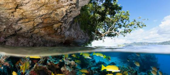 Tropical Island and Underwater Paradise for Divers