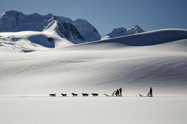 Dogsled in amazing scenery