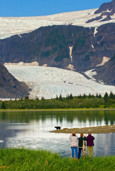 Bear sighting at Kenai Fjords Glacier Lodge