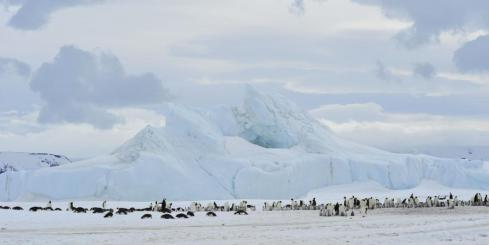 Emperor penguins on Snow Hill Island