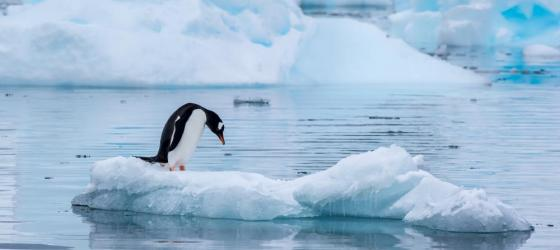 Penguin sighting in Antarctica