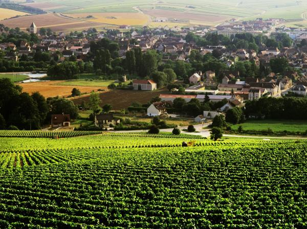 Vineyards in France