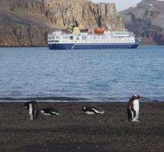 Penguins at Deception Island