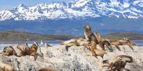 Sea lions at Beagle Channel