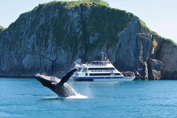 See a whale breach on a cruise!