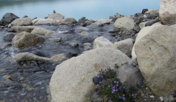 Water, stones, and flowers