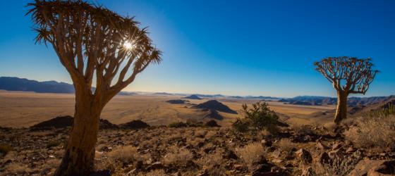 The Namib Desert is home to some of the most unique plant life in the world