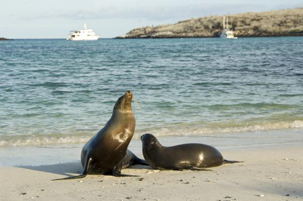 Cruising in the Galapagos