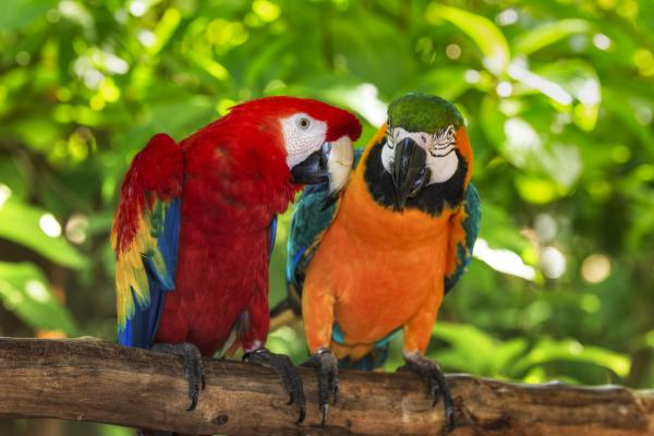 Perched macaws