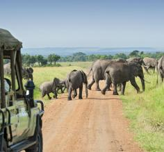 Wildlife on an Africa safari