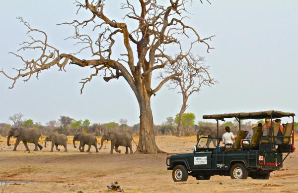 Incredible Safari opportunities