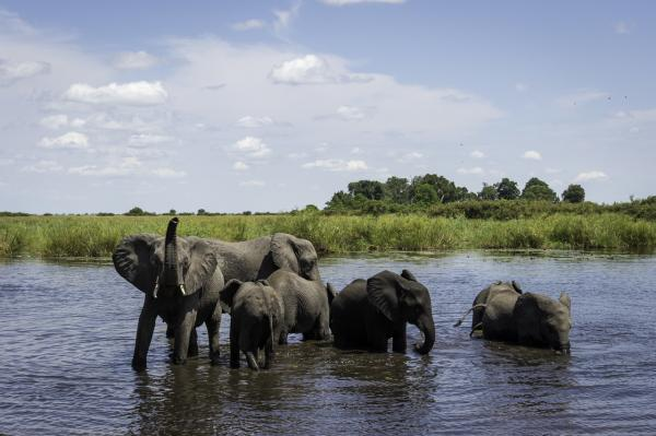 Elephants play outside Linyanti Tented Camp