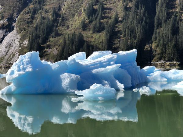 Icebergs everywhere in Tracy Arm Ford