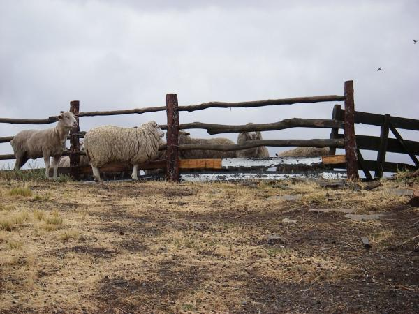 The sheep ranch, El Galpon del Glaciar