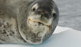 A seal says hello
