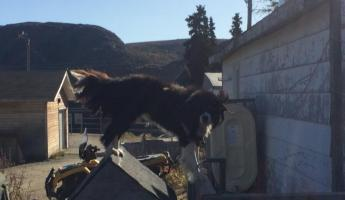 Dog in Nain
