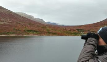 Polar bear watching, Torngat Mountains National Park