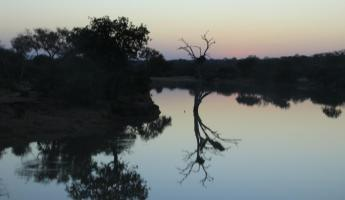 Sunset at Thornybush Reserve