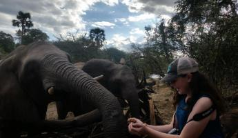 Feeding elephants, Elephant Encounter Victoria Falls