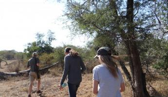 Walking Safari at Thornybush Reserve