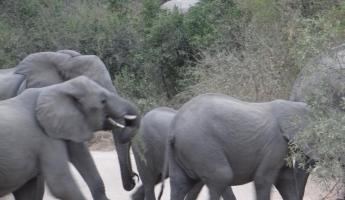 Elephants in Sabi Sands Reserve
