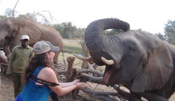 Feeding elephant at the Elephant Encounter Victoria Falls