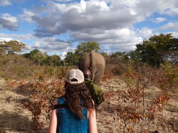 Walking with the elephants, Elephant Encounter Victoria Falls