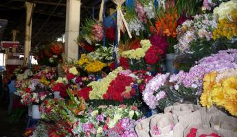 Beautiful floral arrangements at the local San Pedro Market