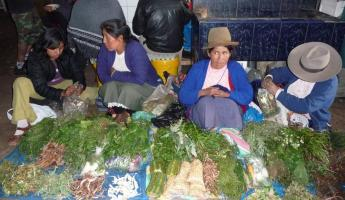 Indigenous women selling medicinal plants at San Pedro marke