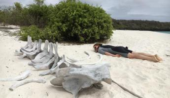 A beached whale.....skeleton