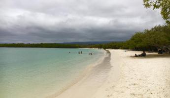 White sand beach at Tortuga Bay