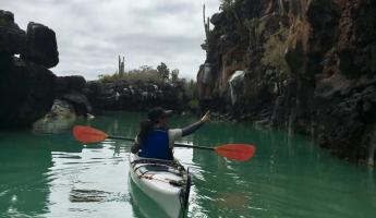 Kayaking from Puerto Ayora in the lava channels