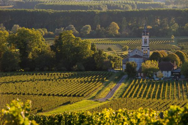 Sauternes Vineyard