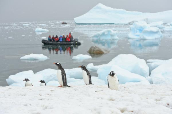 Observing penguins from the zodiacs.
