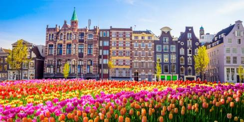 Brilliant tulips growing near Amsterdam
