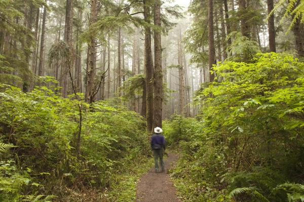 Explore the lush forests of Olympic National Park