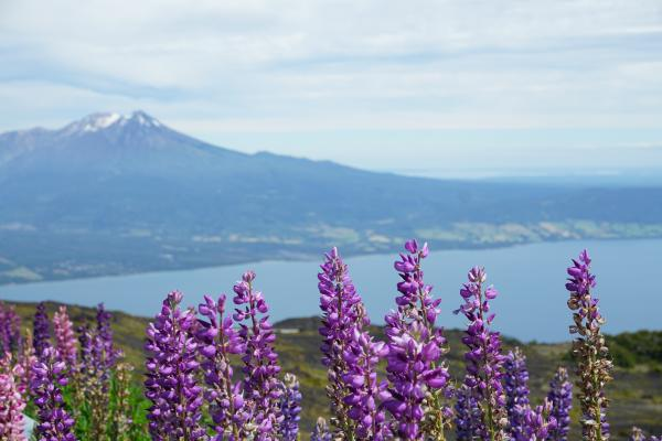 Views from Osorno Volcano