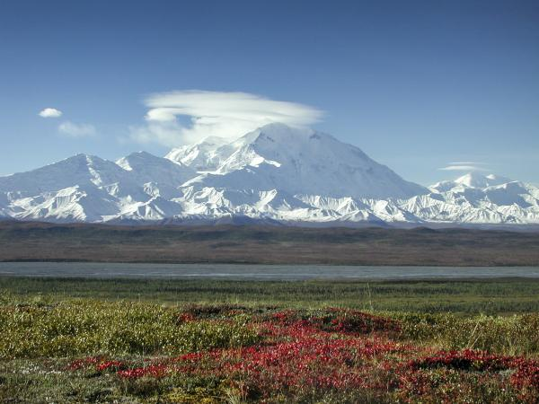 Denali in autumn, with fireweed on the tundra