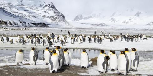 Penguins gathering on the shore