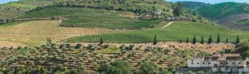 Terraced vineyards of the Douro River Valley