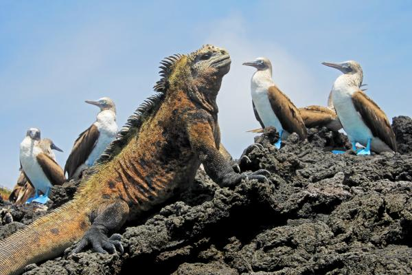 Iconic wildlife of the Galapagos sunning themselves