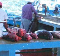 Fish market, with sea lion and pelican helping out