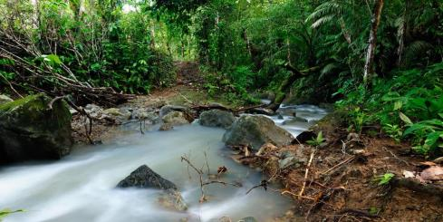 Darien Jungle of Panama