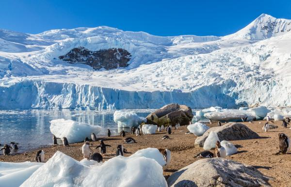 Penguins on the shores of Antarctica