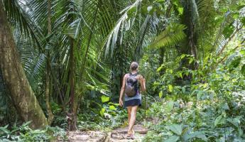 Hiking through the lush rain forest