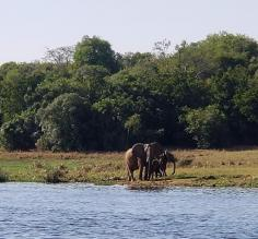 Elephants on shore