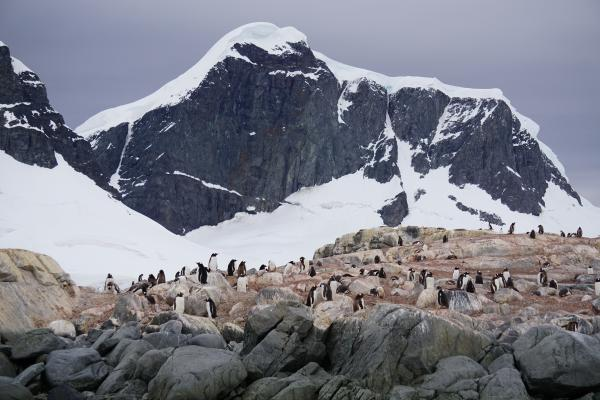 Penguin Colony on the Peninsula