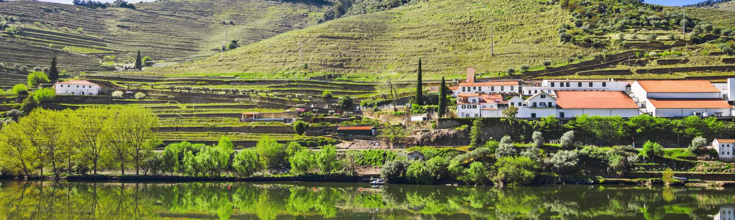Cruise along the scenic Douro river